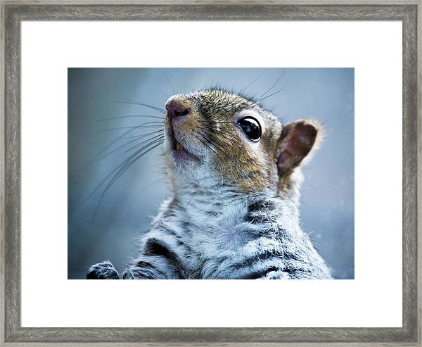 Squirrel With Nose In The Air Framed Print