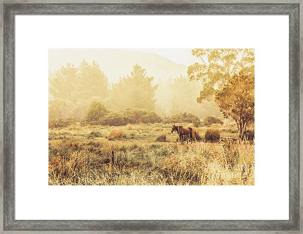 Stallion Homestead Framed Print