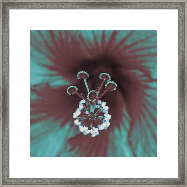 Stamen And Pistils Of Hibiscus Framed Print
