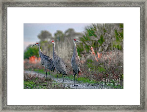 Framed Print featuring the photograph Standing Sandhills by Tom Claud