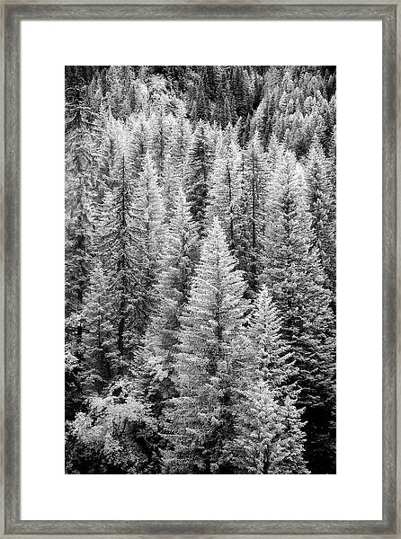 Standing Tall In The French Alps Framed Print