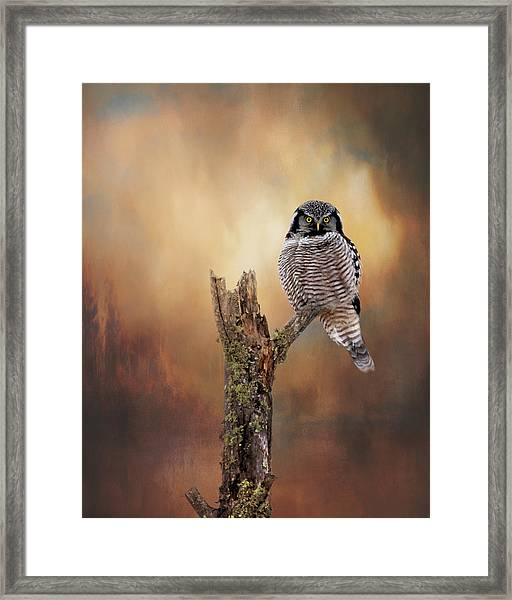 Stare Into My Eyes Framed Print