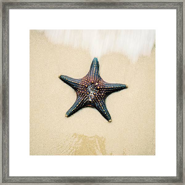 Framed Print featuring the photograph Starfish On The Beach Sand. Close Up. by Rob D Imagery