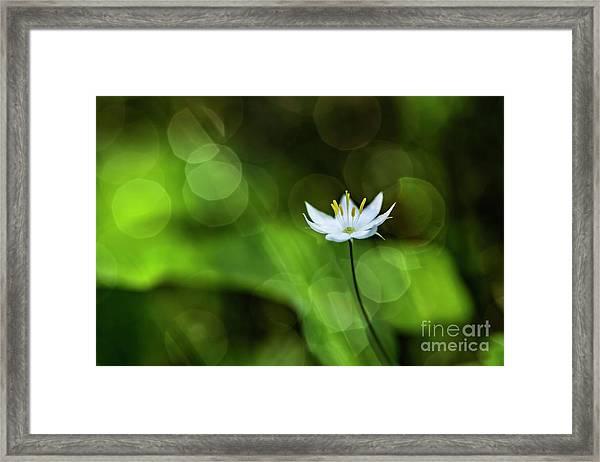 Starflower 2 Framed Print