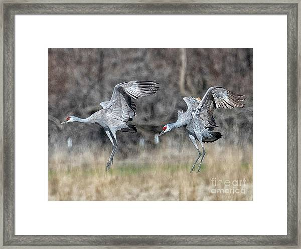 Stay With Your Wingman Framed Print