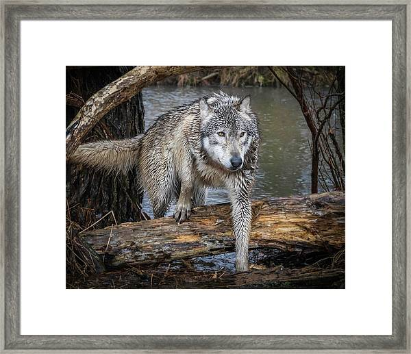Stepping Over Framed Print