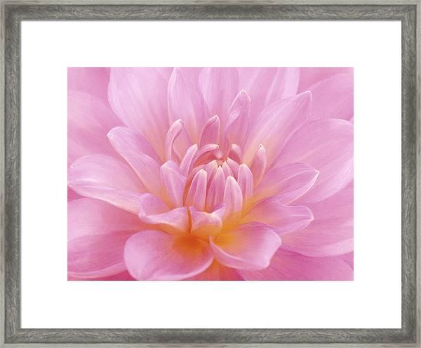 Still Life Photograph, Close-up Of Pink Framed Print by Abdul Kadir  Audah