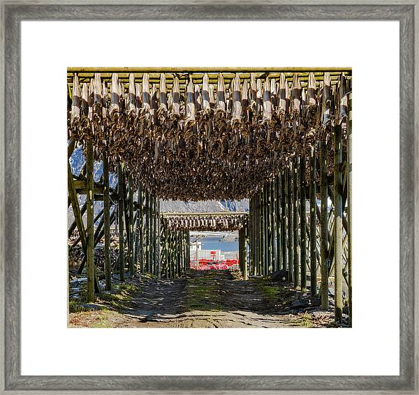 Stockfish Framed Print