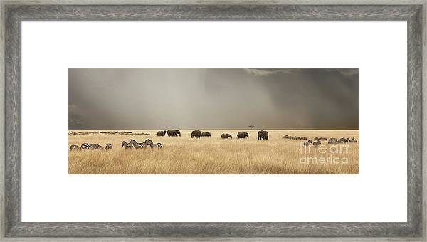 Stormy Skies Over The Masai Mara With Elephants And Zebras Framed Print