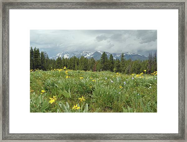 Stormy Tetons And Flowers Framed Print