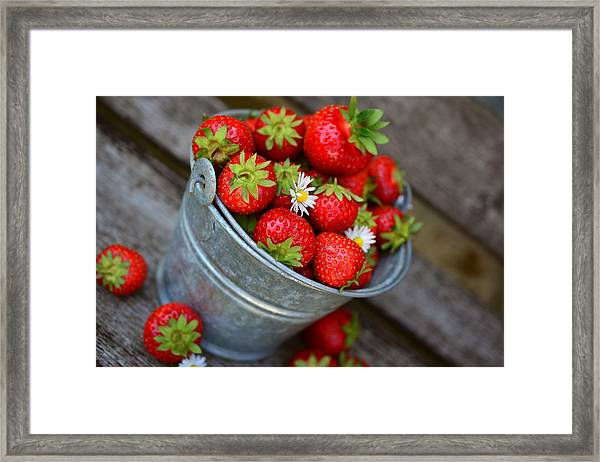 Strawberries And Daisies Framed Print