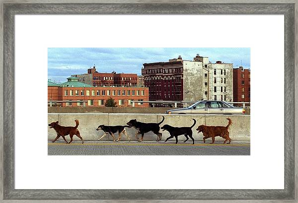 Stray Dogs Stroll Along The Bruckner Framed Print