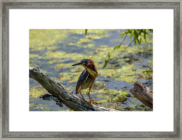 Striking A Pose Framed Print