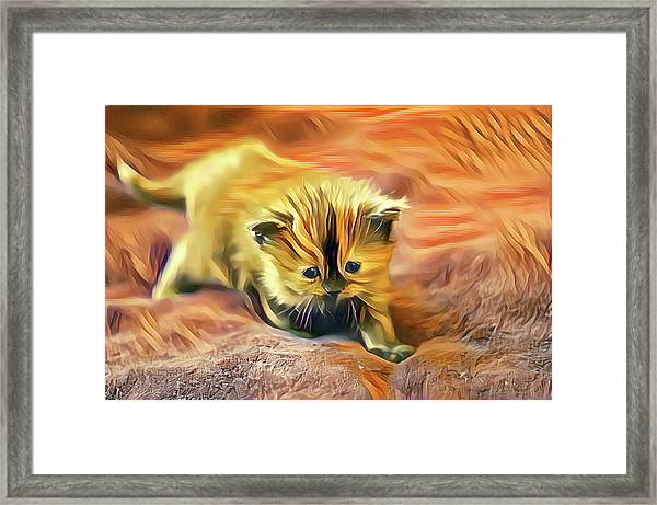 Striped Forehead Kitten Framed Print