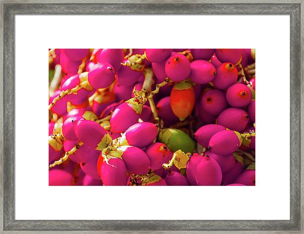 Stuck In The Middle With You Framed Print