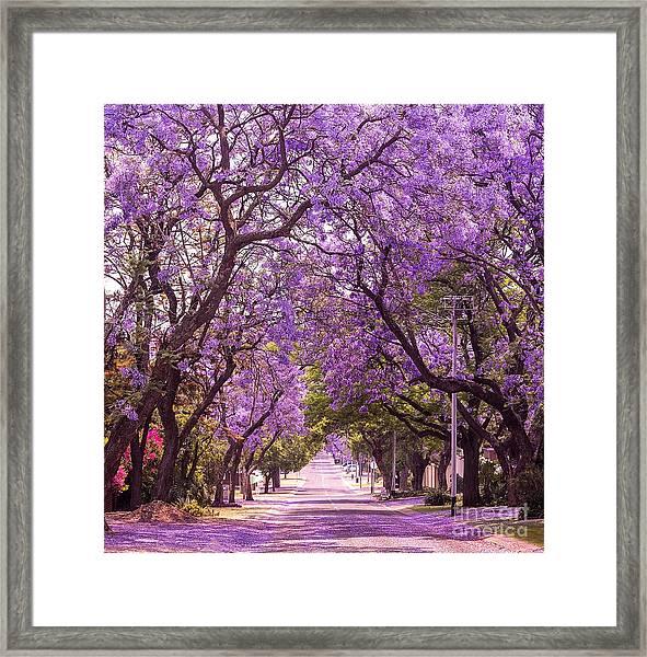 Stunning Alley With Wonderful Violet Framed Print