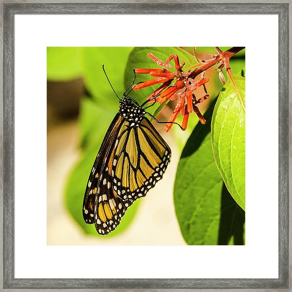 Stunning In Yellow And Orange Framed Print