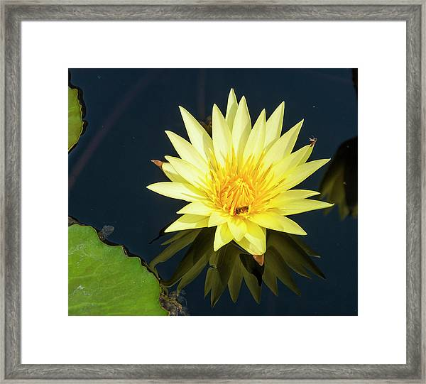 Stunning In Yellow Framed Print