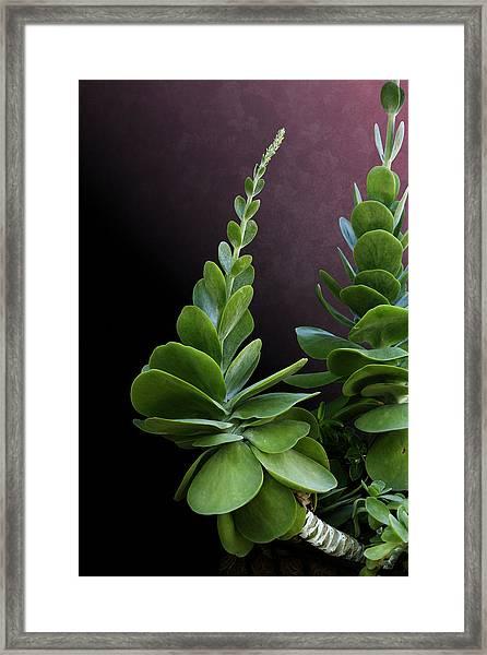 Succulent Spear Framed Print