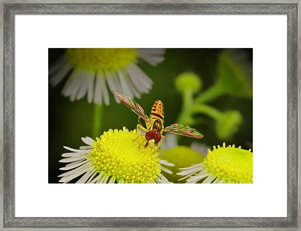Sugar Bee Wings Framed Print