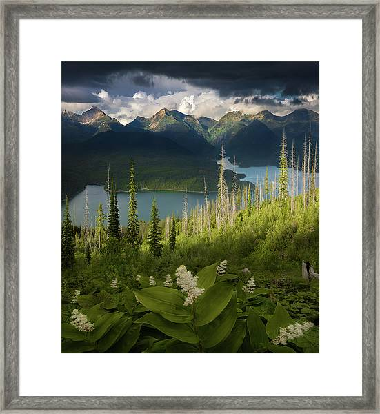 Summer Bloom / Hungry Horse Reservoir, Western Montana  Framed Print