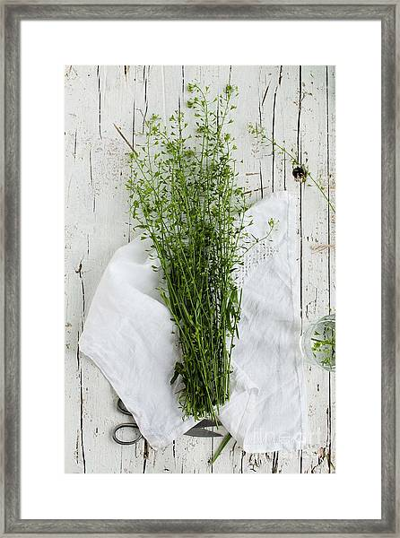 Summer Day With Wild Grass. Top View Framed Print