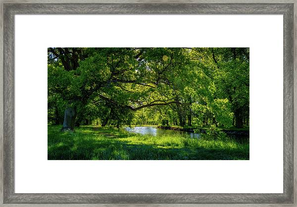 Summer Morning In The Park Framed Print
