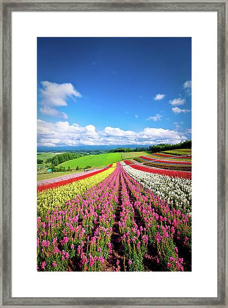 Summer Of Furano Framed Print