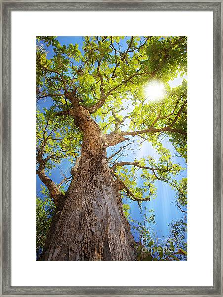 Sun Rays Streaming Through Tree Framed Print
