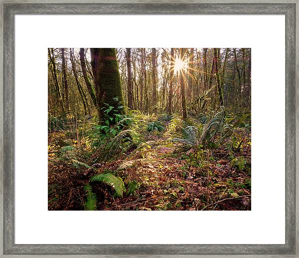 Framed Print featuring the photograph Sun Star In Tryon Creek State Park by Whitney Goodey