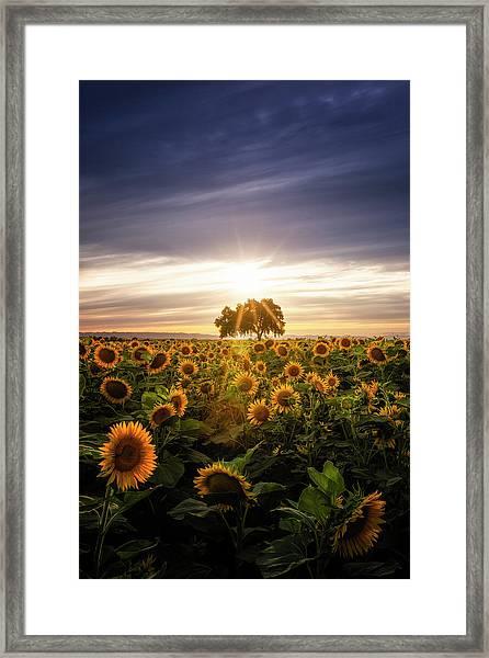 Sunflower Day Framed Print by Vincent James