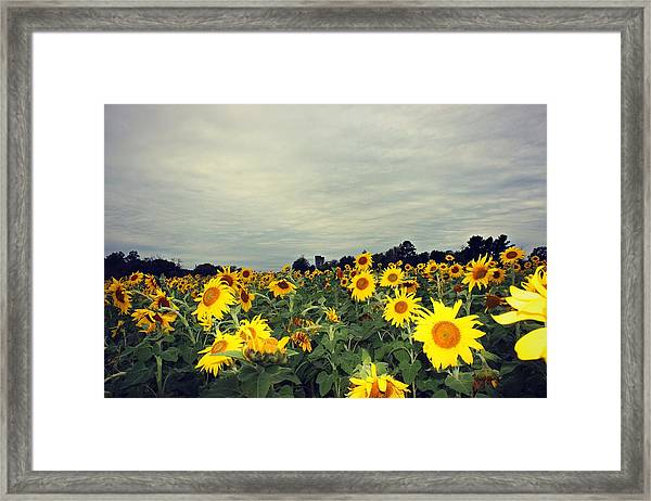 Framed Print featuring the photograph Sunflower Fields by Candice Trimble