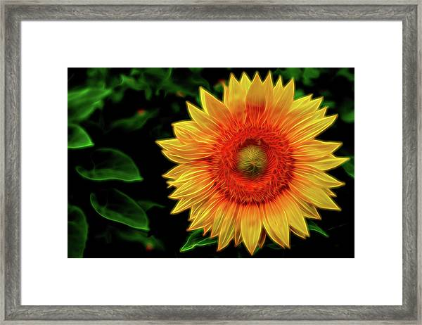 Framed Print featuring the digital art Sunflower by Kevin McClish
