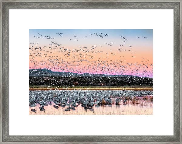 Sunrise At The Crane Pool Framed Print