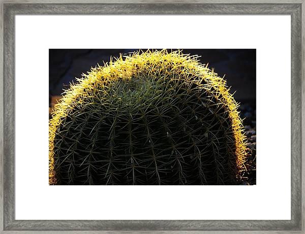 Sunset Cactus Framed Print