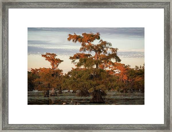 Sunset In The Swamps Of Caddo Lake, Texas Framed Print