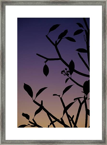 Framed Print featuring the photograph Sunset Silhouette by Nicole Young