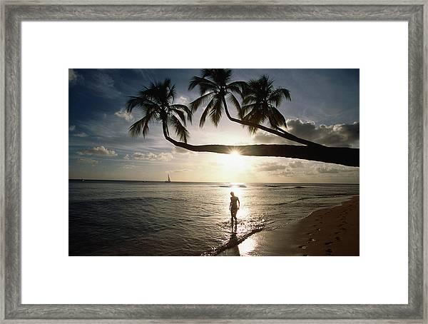 Sunset Silhouette On Turtle Beach Framed Print