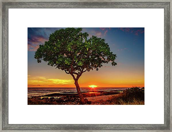 Sunset Tree Framed Print