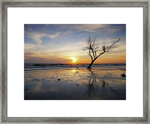Sunset With Dead Tree At Seaside Framed Print