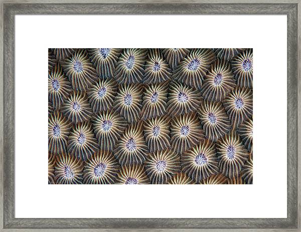 Surface Of Coral Framed Print