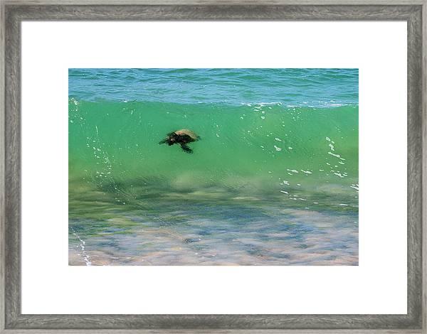 Surfing Turtle Framed Print