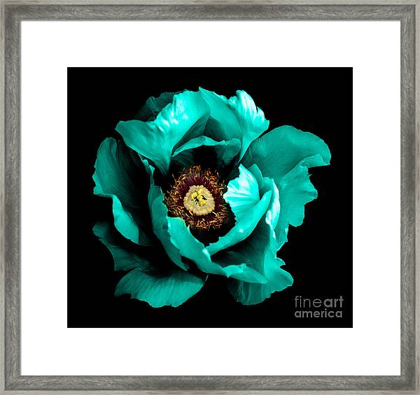 Surreal Dark Chrome Cyan Peony Flower Framed Print
