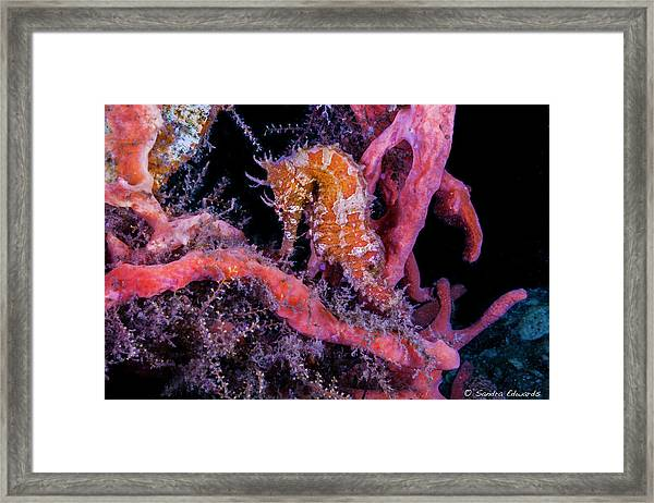 Surrounded Colors Framed Print