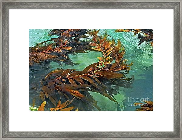 Swaying Seaweed Framed Print