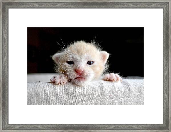 Sweet Newborn Orange Tabby Kitten Framed Print