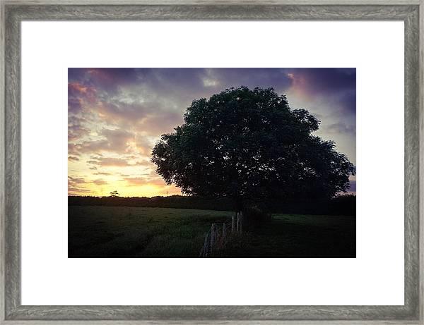 Symme Tree Sunrise Framed Print
