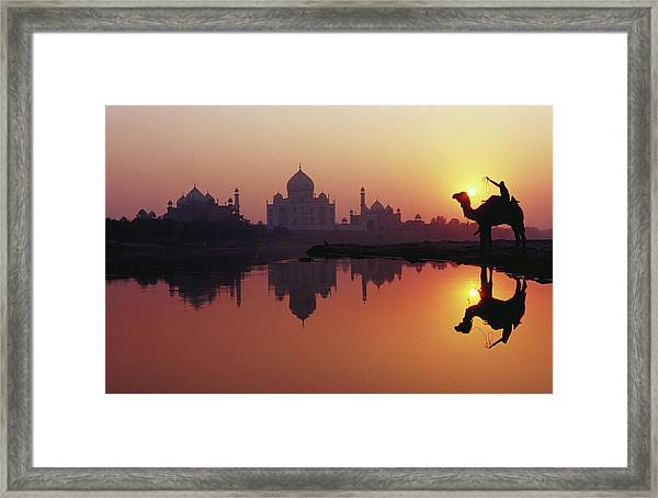Taj Mahal & Silhouetted Camel & Framed Print by Richard I'anson