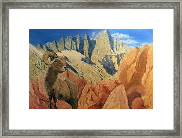 Framed Print featuring the painting Taking In The Morning by Kevin Daly