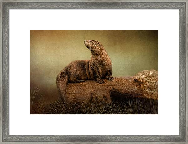 Taking In The View Framed Print